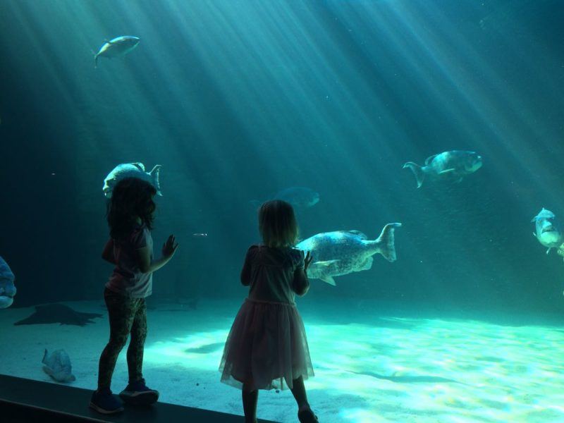 Cape Town, child friendly, things to do, parenting, kids activities, agaaain, outings, childhood, things to do, things to do with kids in Cape Town, things to do with kids near me, things to do with kids this weekend, kids activities this weekend, family adventures Cape Town, children's activities Cape Town, toddlers, two oceans aquarium, V&A waterfront, aquarium, animal encounters, indoors