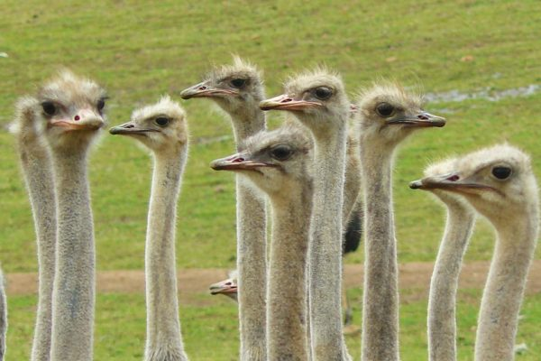 Cape Town, child friendly, things to do, parenting, kids activities, agaaain, outings, childhood, things to do, things to do with kids in Cape Town, things to do with kids near me, things to do with kids this weekend, kids activities this weekend, family adventures Cape Town, children's activities Cape Town, toddlers, cape point ostrich farm, ostrich farm, ostrich rides, southern peninsula
