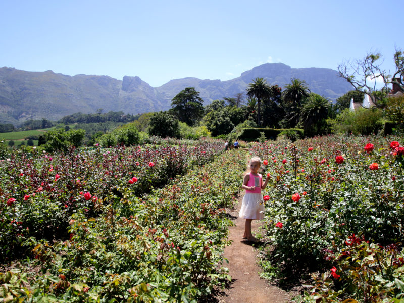 Cape Town, child friendly, things to do, parenting, kids activities, agaaain, outings, childhood, things to do, things to do with kids in Cape Town, things to do with kids near me, things to do with kids this weekend, kids activities this weekend, family adventures Cape Town, children's activities Cape Town, toddlers, chart farm, wynberg, rose picking, southern suburbs