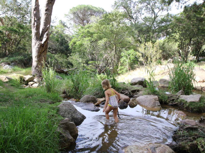 Cape Town, child friendly, things to do, parenting, kids activities, agaaain, outings, childhood, things to do, things to do with kids in Cape Town, things to do with kids near me, things to do with kids this weekend, kids activities this weekend, family adventures Cape Town, children's activities Cape Town, toddlers, deer park forest, nature, kids outing, kids adventure, hiking